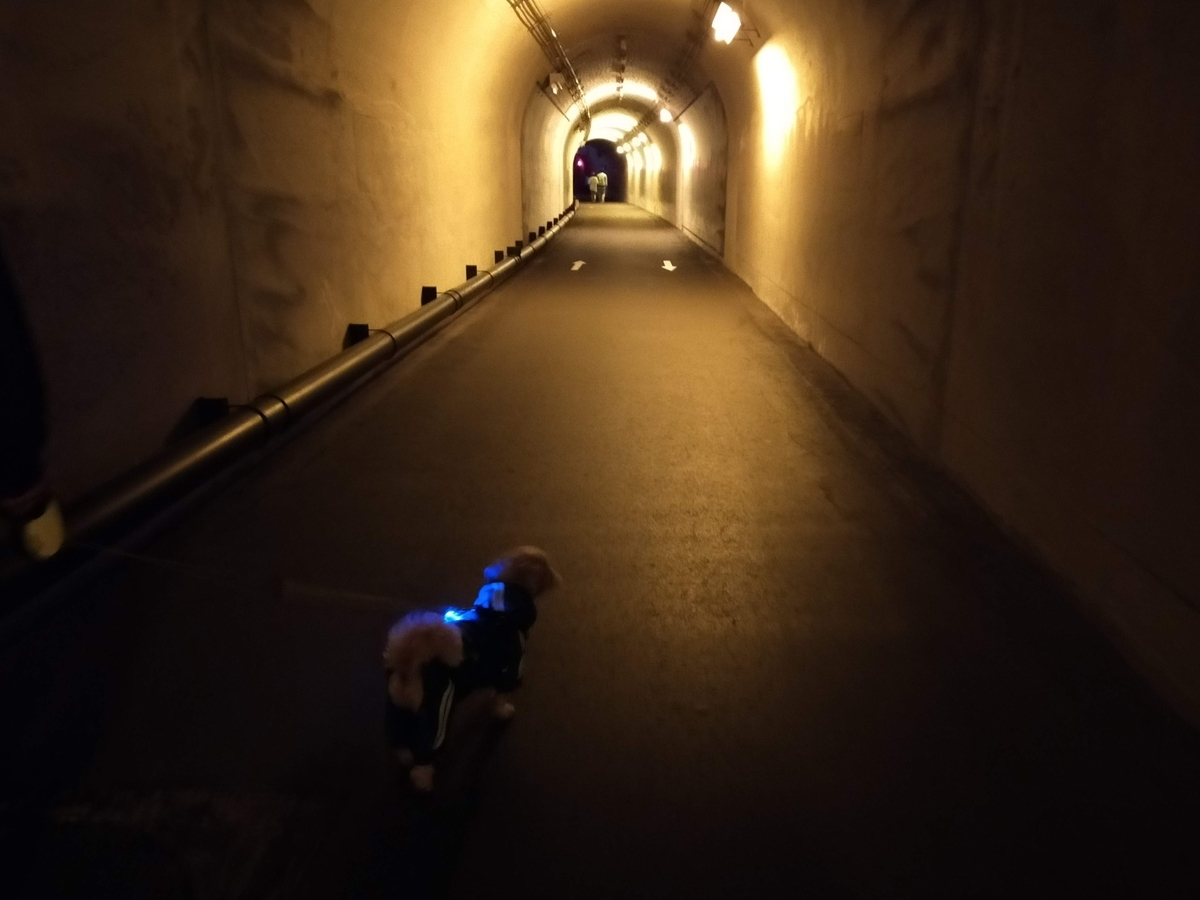 清津峡 ペット トンネル