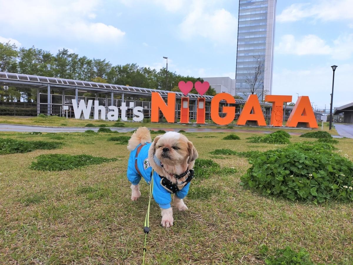 新潟市 What's NIIGATA