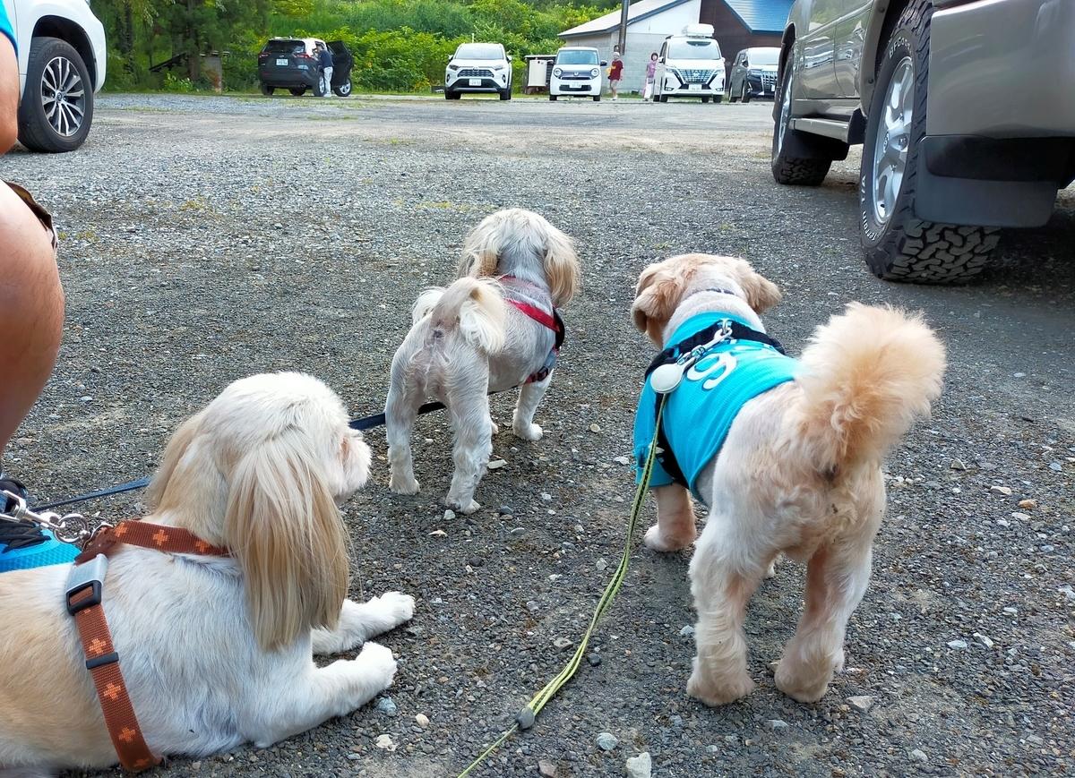 白馬塩の道温泉 倉下の湯 くるま旅クラブ くるま旅パーク キャンピングトレーラー 車中泊 旅犬 シーズー