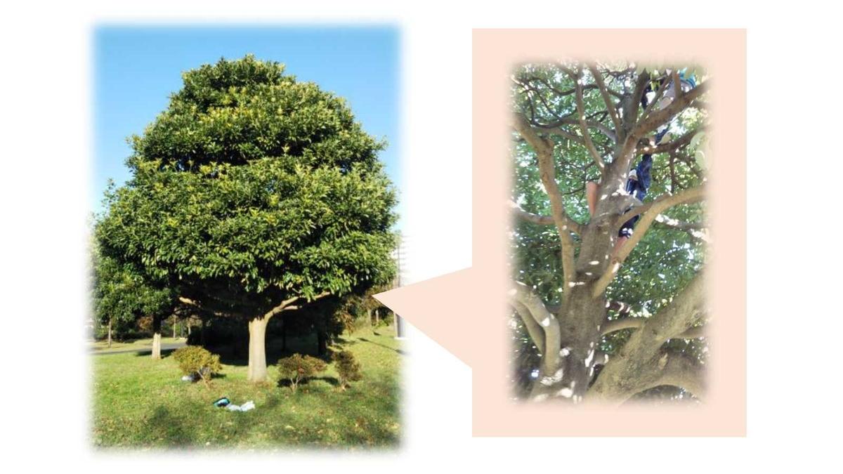 公園にあった木登りに最適な木の様子