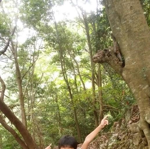 キリンのように見える木の様子