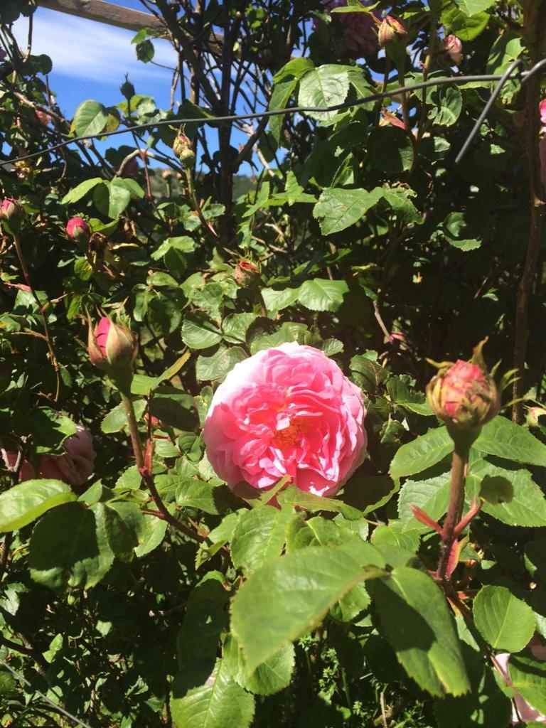 f:id:les-papillons-roses:20160623234227j:plain