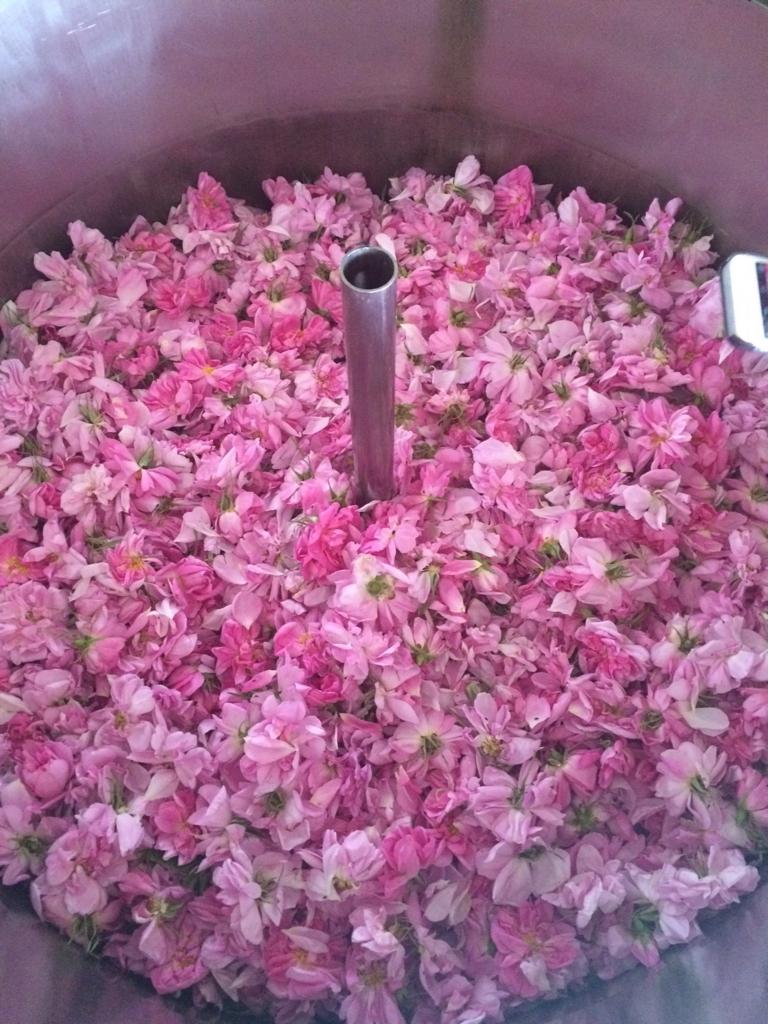 f:id:les-papillons-roses:20160623234243j:plain