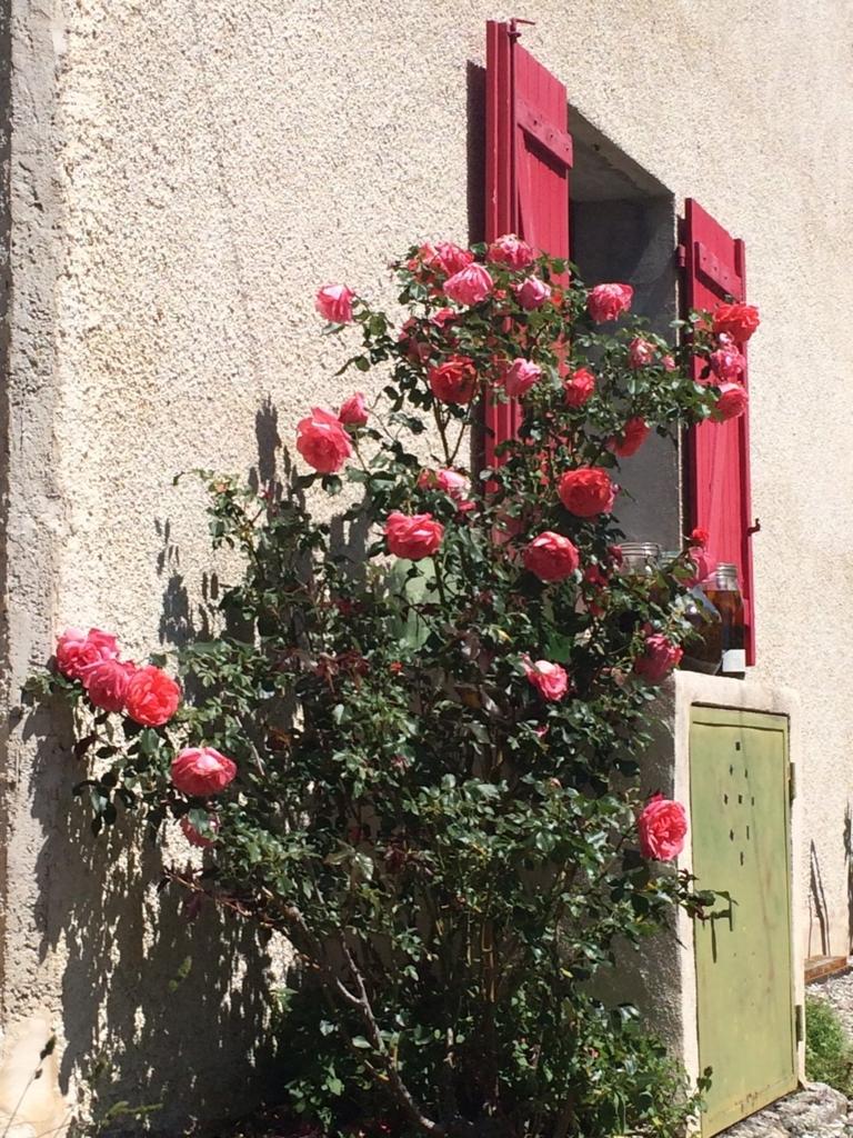 f:id:les-papillons-roses:20160725015211j:plain