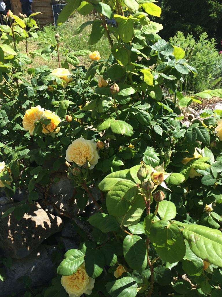 f:id:les-papillons-roses:20160725015243j:plain