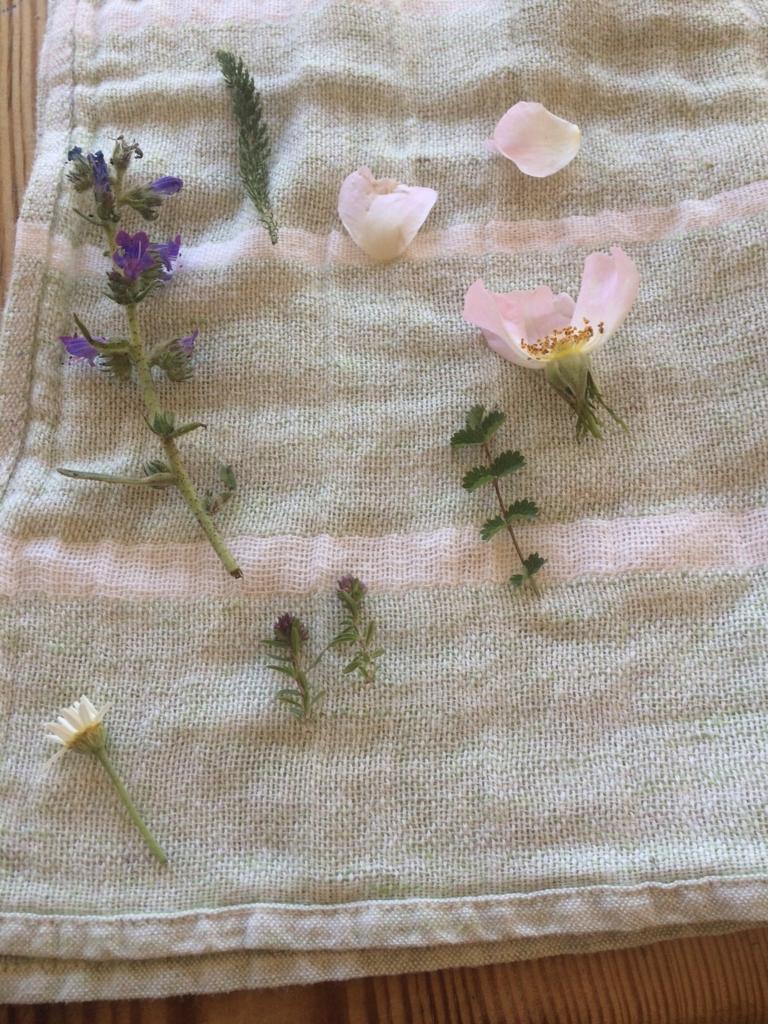 f:id:les-papillons-roses:20160830174003j:plain