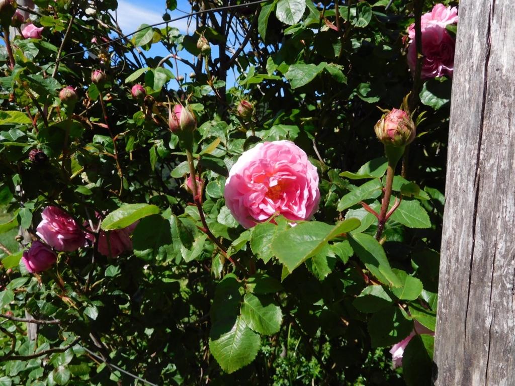 f:id:les-papillons-roses:20160830175949j:plain
