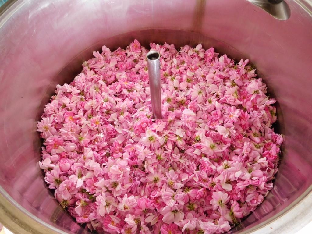 f:id:les-papillons-roses:20160831000134j:plain