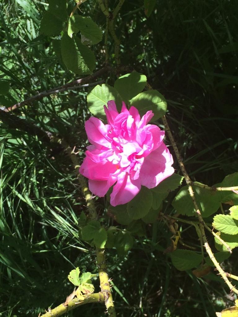 f:id:les-papillons-roses:20160831004247j:plain