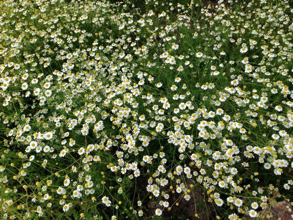 f:id:les-papillons-roses:20160905190239j:plain