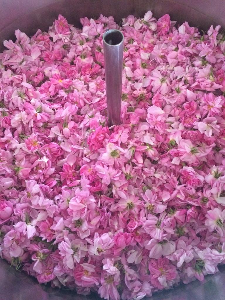 f:id:les-papillons-roses:20170106213926j:plain