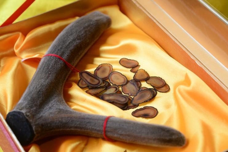 鹿茸(ろくじょう):腎臓を養う最強の生薬。精力剤、滋養強壮剤としても有名です。
