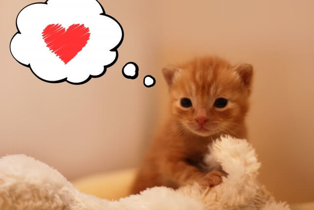 マッサージ(整体)で猫、犬と仲良くできる