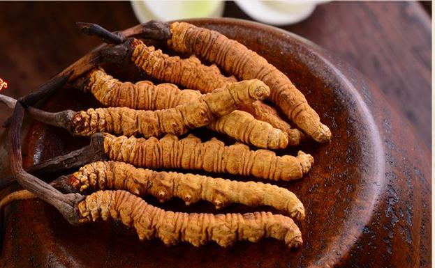 「天仙液」の生薬:冬虫夏草、高いだけで効き目はない