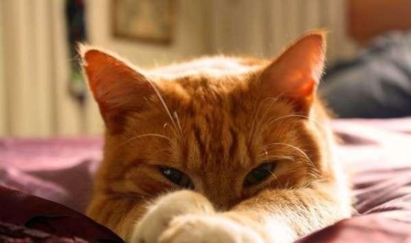 猫アレルギーは漢方薬で簡単に治る