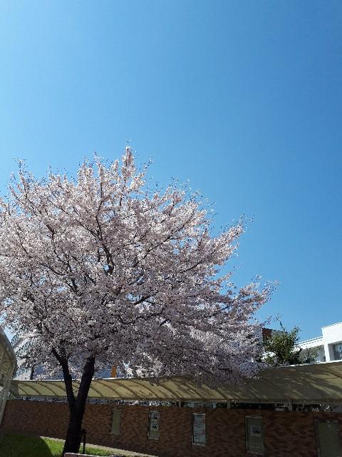 f:id:lienmachi:20180331080341j:image