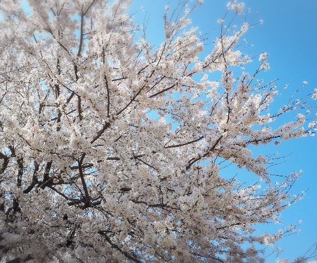f:id:lienmachi:20180331080759j:image