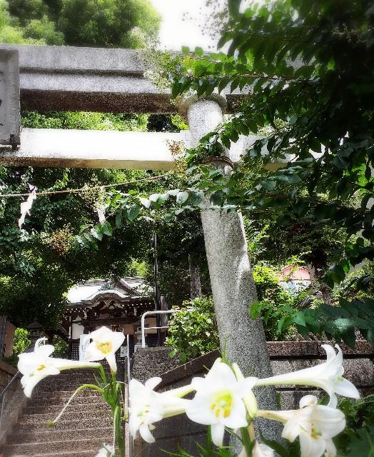 f:id:lienmachi:20180816165953j:image
