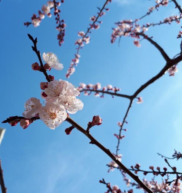 f:id:lienmachi:20190316183902j:image