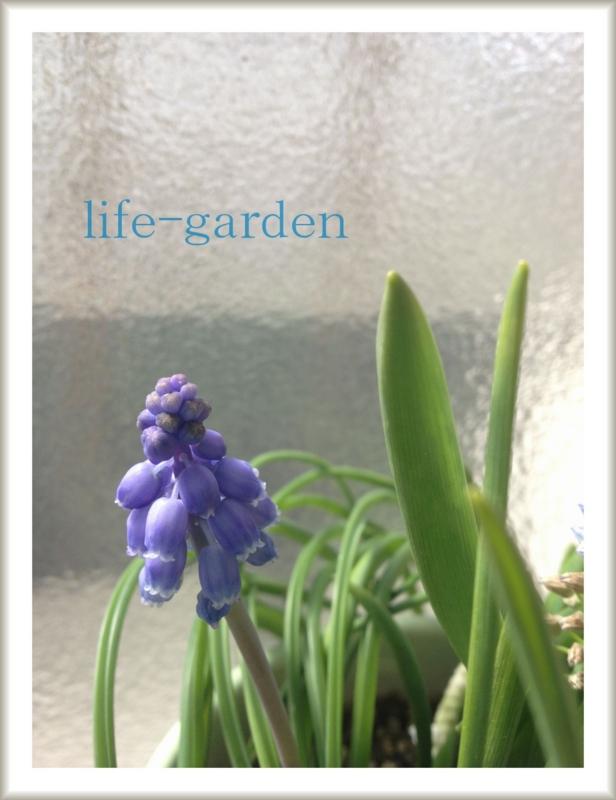 f:id:lif-g:20130228101429j:image:w360