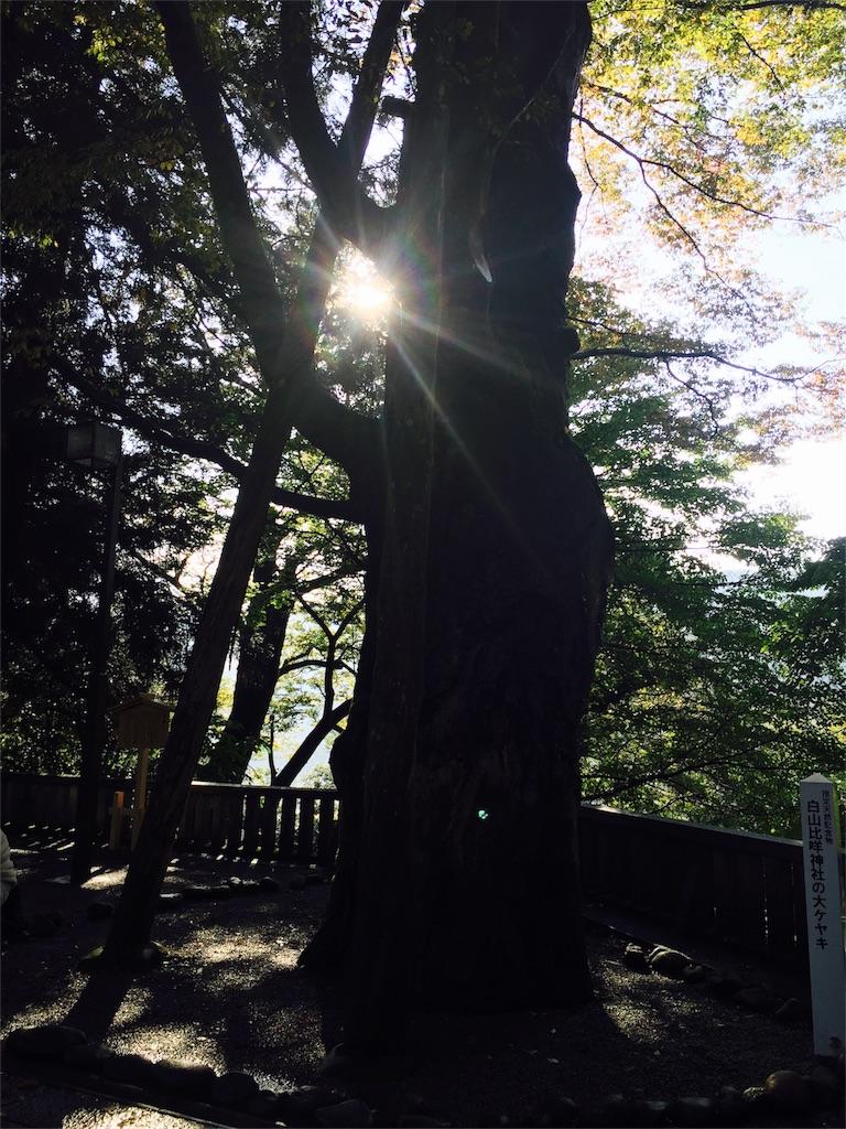 f:id:life-art-tsubasa:20161104235258j:image