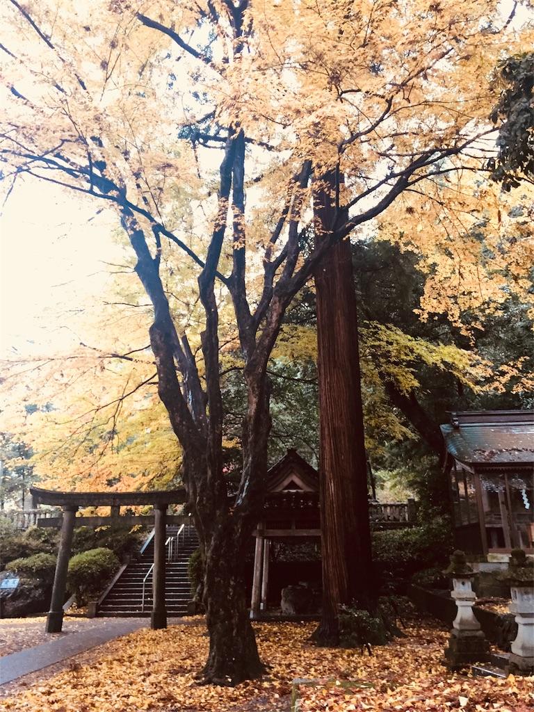 f:id:life-art-tsubasa:20171126235239j:plain