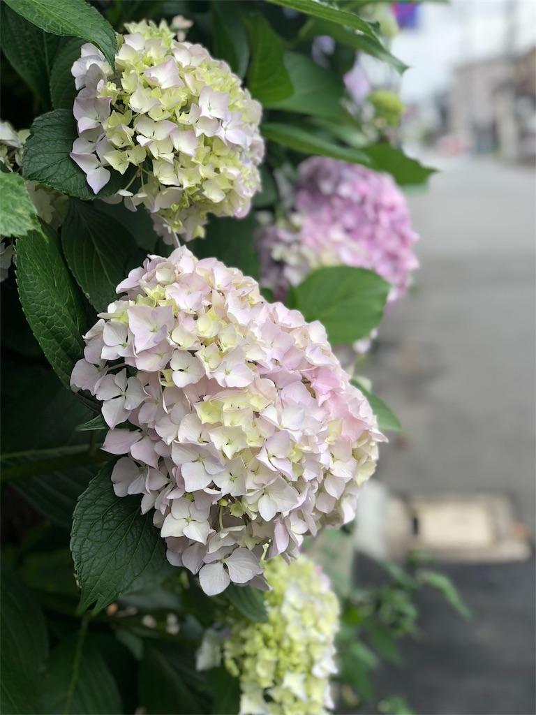 f:id:life-art-tsubasa:20180607110718j:plain