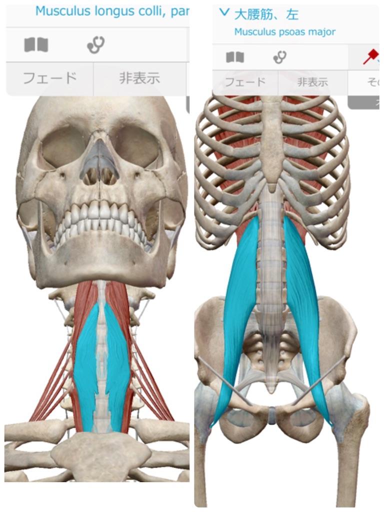 f:id:life-art-tsubasa:20190221084433j:image