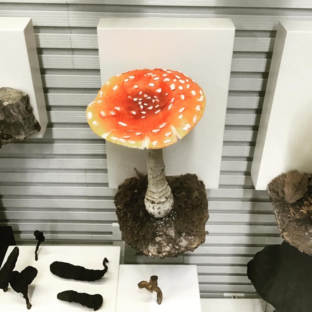 f:id:life-history-mushroom:20180107232017j:plain