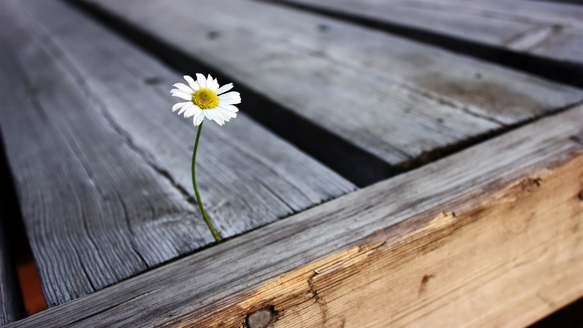 f:id:life-is-distress-or-beautiful:20200827113104j:plain