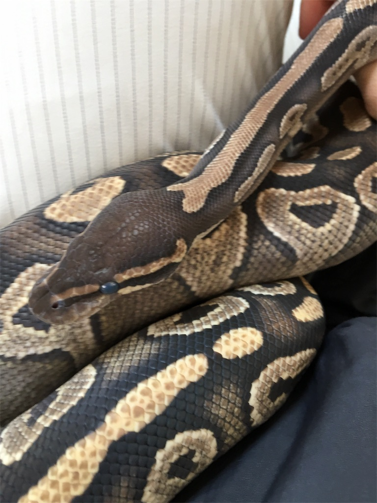 f:id:life-with-reptiles:20180415104540j:image