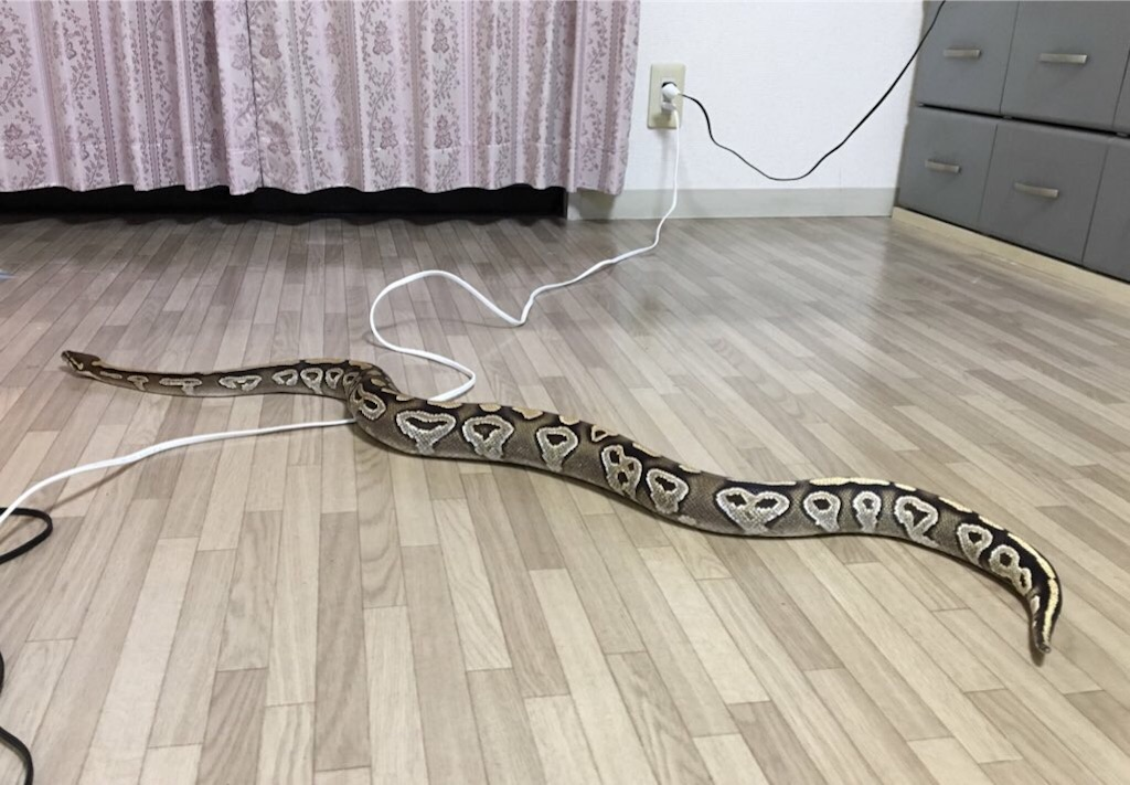 f:id:life-with-reptiles:20181222181924j:image