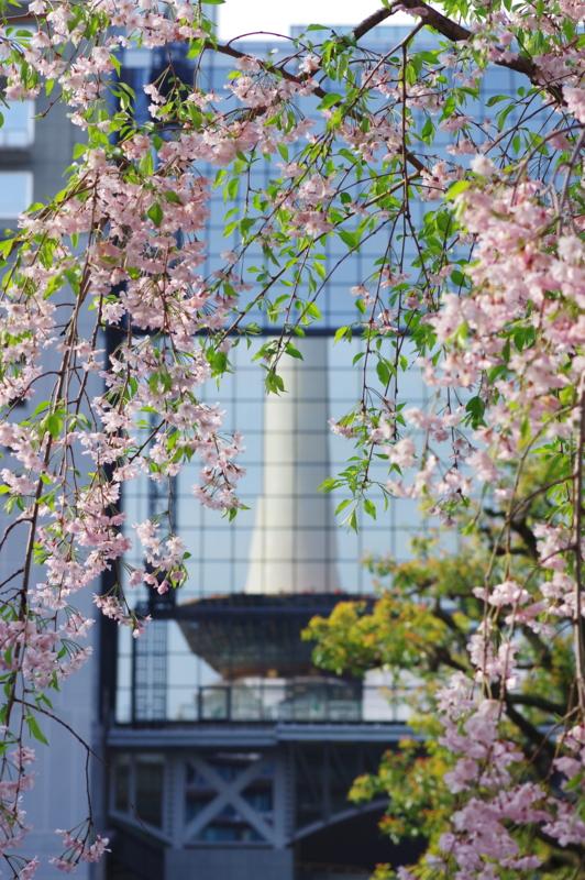 京都新聞写真コンテスト 駅前に春が来た