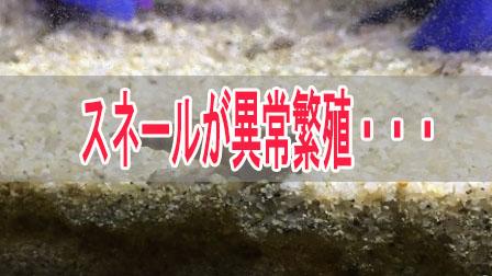 「スネール異常繁殖」イメージ