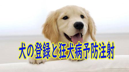 「犬の登録と狂犬病予防注射」イメージ