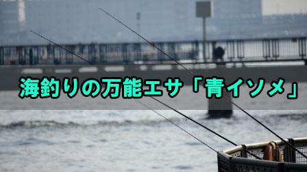 「海釣りの万能エサ青イソメについて」イメージ
