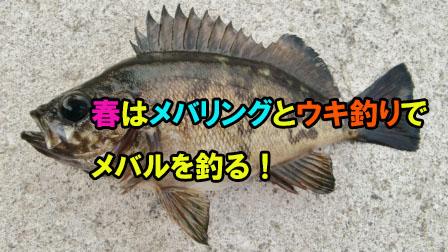 「春はメバリングとウキ釣りでメバルを釣る!」イメージ