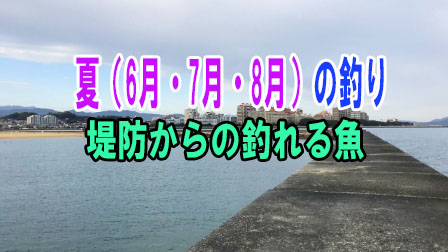 「夏(6月・7月・8月)の釣り 堤防からの釣れる魚」イメージ