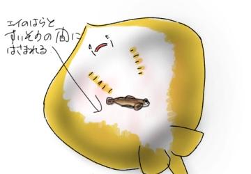 f:id:like_fish:20171021200544j:plain