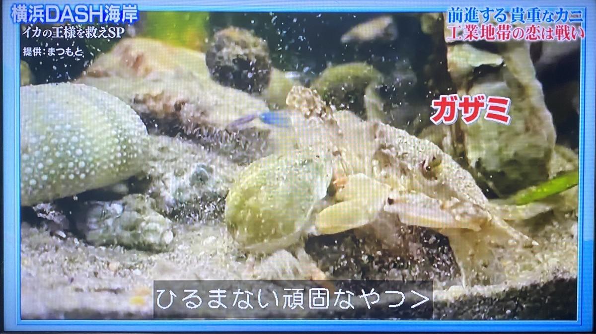 f:id:like_fish:20210719011523j:plain