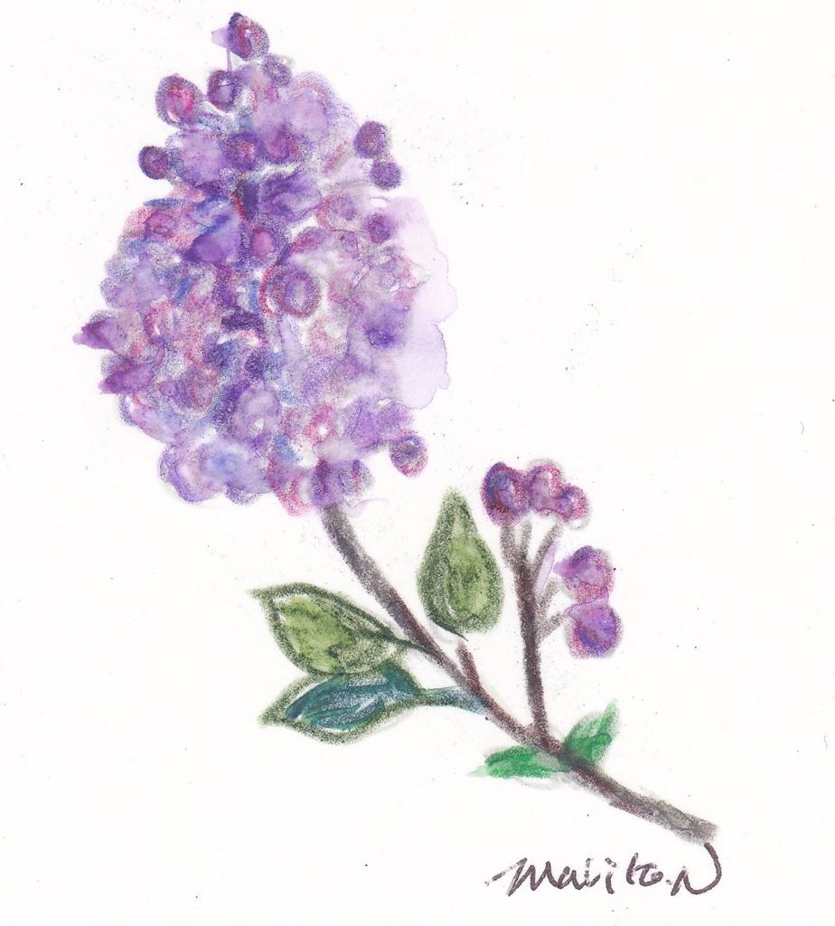 f:id:lilac-dori:20160206180530j:plain