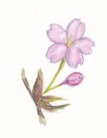 f:id:lilac-dori:20160430122327p:plain