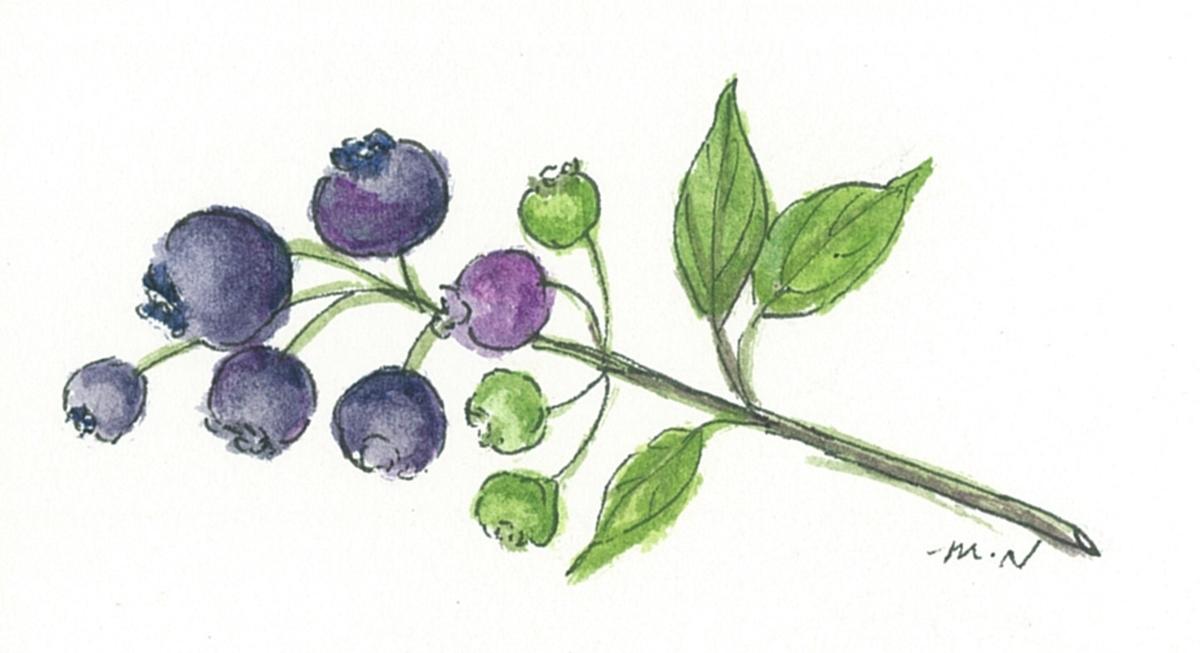 f:id:lilac-dori:20200717124928j:plain