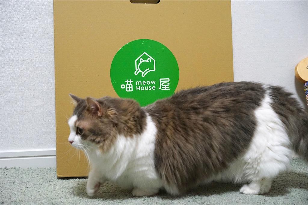 猫屋のパッケージと猫