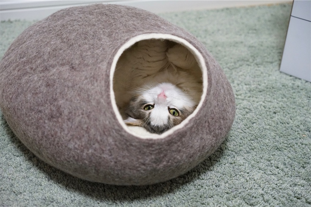 まゆ型のベッドに入って寝転ぶ猫