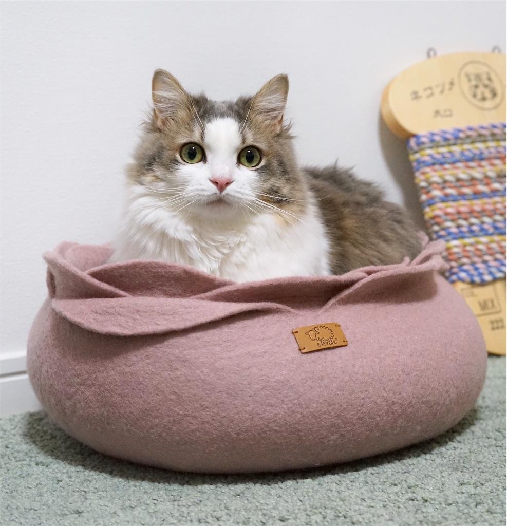 eleveleのベッドに入る猫