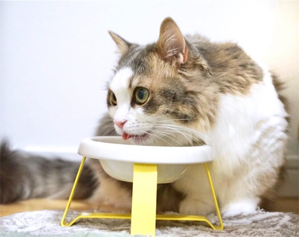 ペコロのフードスタンドを使う猫