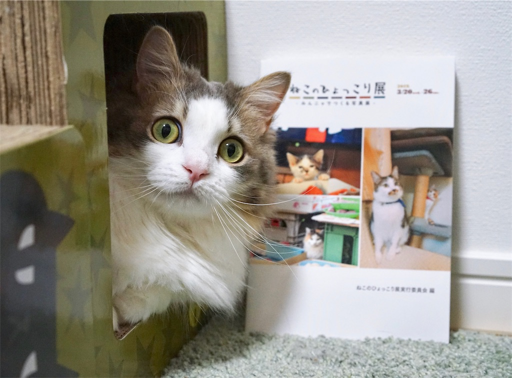 写真集と猫
