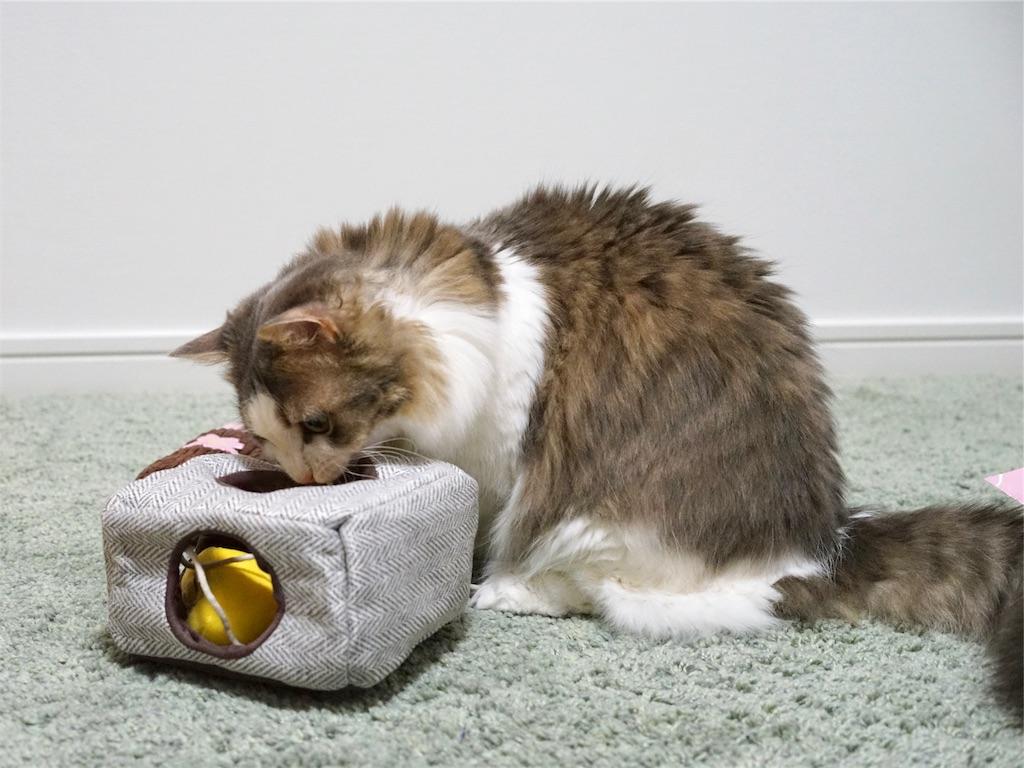 春のにゃんこ弁当を見る猫