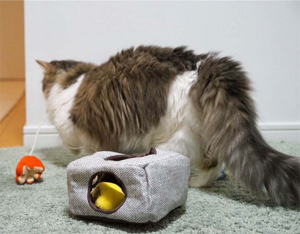 春のにゃんこ弁当を見る猫のタコさんウインナーをくわえて走る猫
